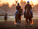 OCT 29: Breeders' Cup Juvenile  entrant Shoplifted, trained by Steven M. Asmussen, at Santa Anita Park in Arcadia, California on Oct 29, 2019. Evers/Eclipse Sportswire/Breeders' Cup