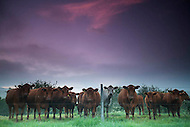 Image Ref: A048<br /> Location: Yarra Valley<br /> Date of Shot: 16th November 2013