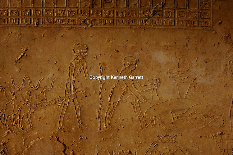 Zahi Hawass Secret Egypt Travel Guide; Egypt; archaeology; Asyut; Meir; Tombs; Ni Ankh Pepi Kem; Pepi-Ankh; butchering scene; cattle, Old Kingdom