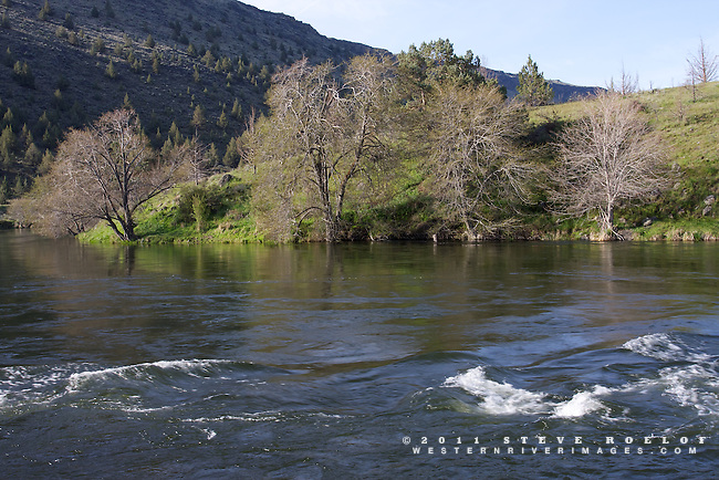 Spring emerges on the Deschutes River, Oregon.