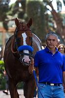 """ARCADIA, CA  JUNE 23: Justify and Eduardo Luna  on  """"Justify Day"""" on June 23, 2018 at Santa Anita Park in Arcadia, CA.  (Photo by Casey Phillips/Eclipse Sportswire/Getty Images)"""