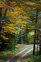 Trees with changing leaves stand above a two-track road outside of Shutesbury, Massachusetts, USA.