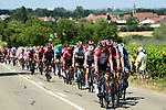 The peloton in action during Stage 5 of the 2019 Tour de France running 175.5km from Saint-Die-des-Vosges to Colmar, France. 10th July 2019.<br /> Picture: ASO/Alex Broadway | Cyclefile<br /> All photos usage must carry mandatory copyright credit (© Cyclefile | ASO/Alex Broadway)
