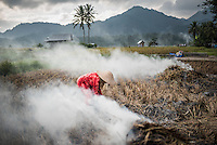 Farmer burning crops in rice paddy fields, Bukittinggi, West Sumatra, Indonesia