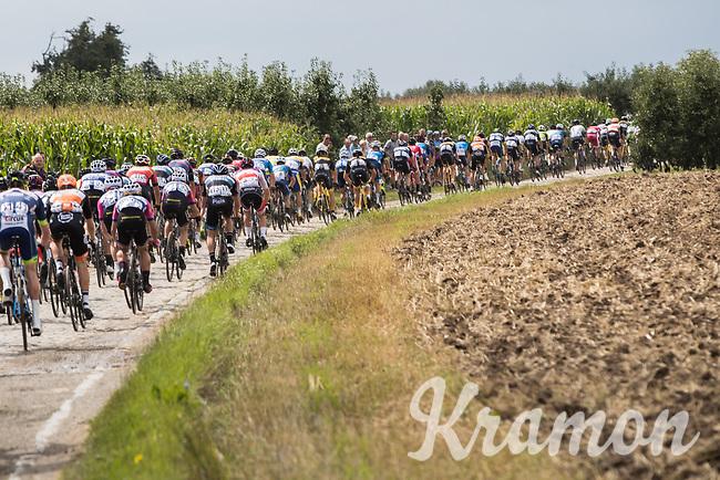 peloton over cobbled section<br /> <br /> Dwars door het Hageland (1.1)<br /> 1 Day Race: Aarschot &gt; Diest (194km)