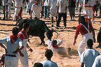 Europe/France/Aquitaine/64/Pyrénées-Atlantiques/Bayonne: Course de vaches lors des fêtes de Bayonne