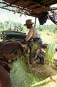 Teofilandia, Bahia state, Brazil. Man operating sisal cutting machine. Dangerous slave labour.