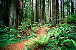 California: Mendocino, Hiking, Hiker, model released, Jughandle Reserve, Photo: camend102.Photo copyright Lee Foster, 510/549-2202, lee@fostertravel.com, www.fostertravel.com