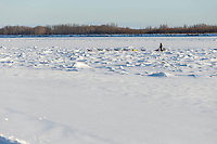 Scott Smith crosses jumbled sea ice on the Yukon River as he approaches the Galena checkpoint on Thursday March 12, 2015 during Iditarod 2015.  <br /> <br /> (C) Jeff Schultz/SchultzPhoto.com - ALL RIGHTS RESERVED<br />  DUPLICATION  PROHIBITED  WITHOUT  PERMISSION