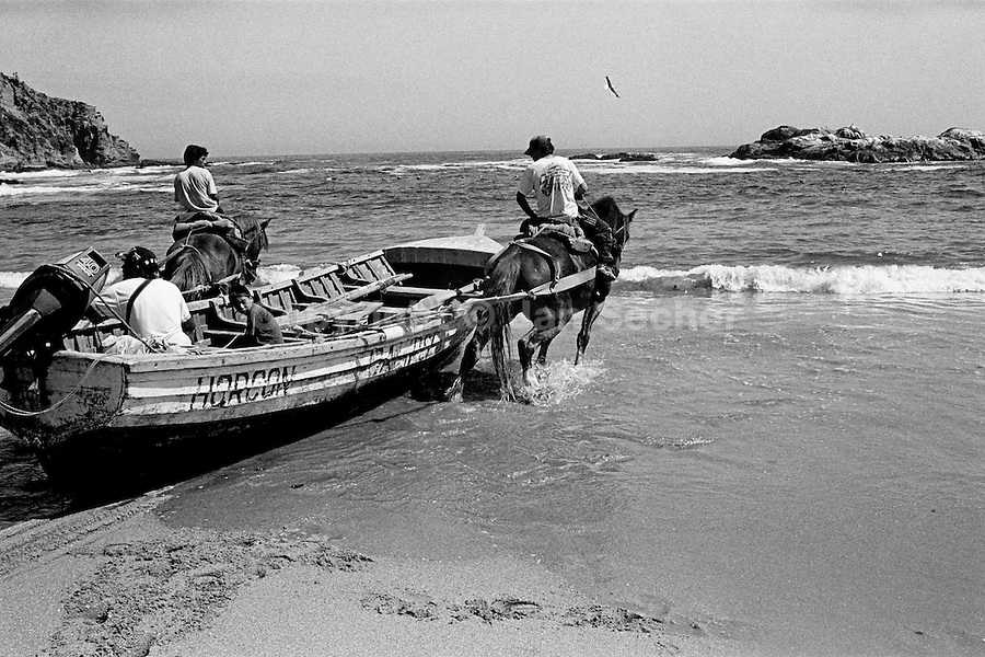 Horses drag a fishing boat to the deep water on the Pacific coast in Horcones, Chile, 5 March 2002.