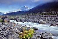Wildflowers, White River and Mt. Hood. Oregon.