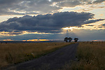 Idaho, South central, Twin Falls, Amsterdam. Evening light over a road into a game preserve in late summer.