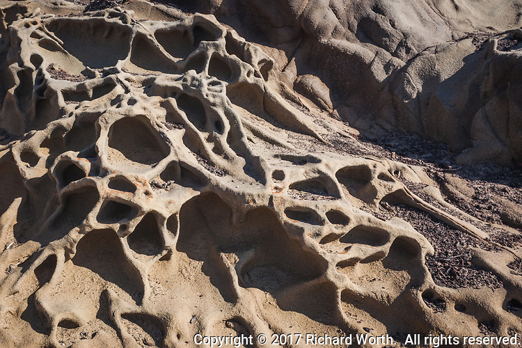 Tafoni formations at Bean Hollow State Beach appear to sag and flow even though they are etched in stone.