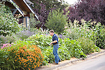 """Andrew and Patricia Nimelman cosult with Donna Smith (otherwise known as """"Your Backyard Farmer) at their home in NE Portland, OR.  Andrew harvesting pickeling cucumbers."""