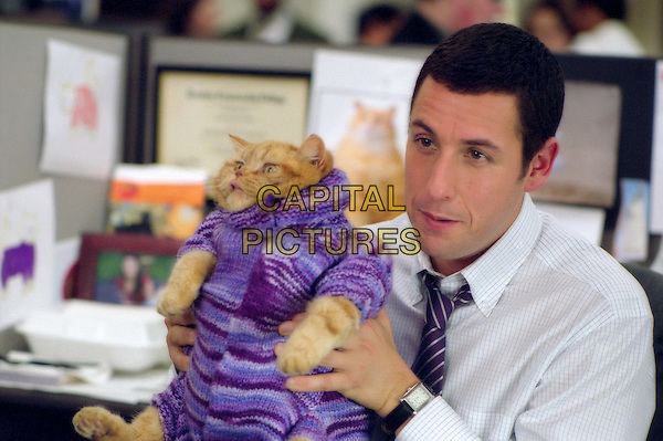 As part of his job, Dave Buznik (Adam Sandler) devises pet outfits in Revolution StudiosÍ comedy Anger Management, a Columbia Pictures release. .Filmstill - Editorial Use Only.Ref: FB.sales@capitalpictures.com.www.capitalpictures.com.Supplied by Capital Pictures.
