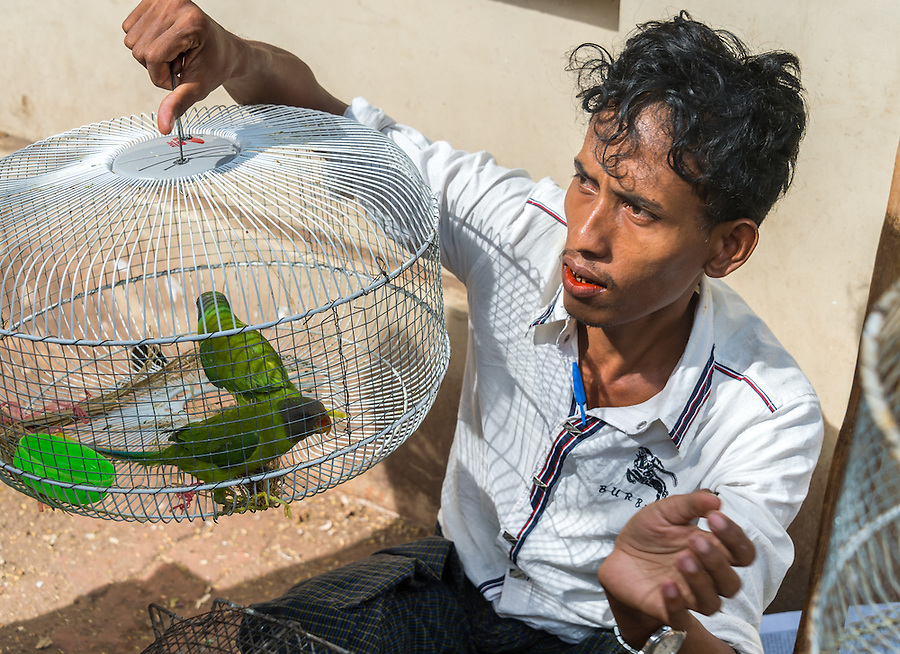 YANGON, MYANMAR - CIRCA DECEMBER 2013: Portrait street vendor with parakeets in Yangon.