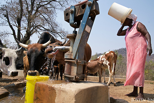A woman and her cattle drink by a borehole in drought-hit Masking Province, Zimbabwe.  <br /> <br /> Drought in southern Africa is devastating communities in Zimbabwe, leaving 4 million people urgently in need of food aid. The government declared a state of emergency,. <br /> <br /> Here in Masvingo Province, the country's hardest hit province, vegetation has wilted, livestock is dying, and people are at serious risk of famine. <br /> <br /> Pictures shot by Justin Jin