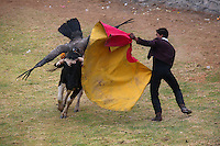 A matador holds out a red cape which a bull charges at, with a condor attached to it pecking on its back, during the Yawar Fiesta in Coyllurqui in the Peruvian Andes on Independence Day. This celebration symbolises the clash between the indigenous people (represented by the condor) and the Spanish (represented by the bull). The condor is paraded around town, strapped on top of the bull, given alcohol, and finally set free.