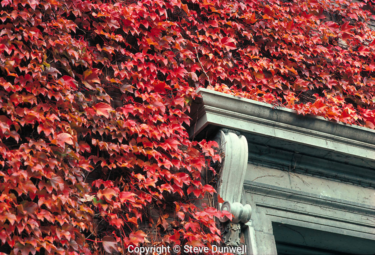 ivy on Robinson Hall, Harvard University, Cambridge, MA