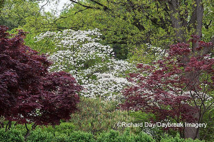 65021-03801 Japanese Garden in spring,  Missouri Botanical Garden, St Louis, MO
