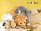 Marek, ANIMALS, REALISTISCHE TIERE, ANIMALES REALISTICOS, cats, photos+++++,PLMP2622,#a#