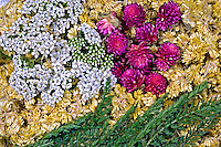 Alimentos fitoterápicos. Macela, Perpétua e Mil-folhas. Foto de Zig Koch.