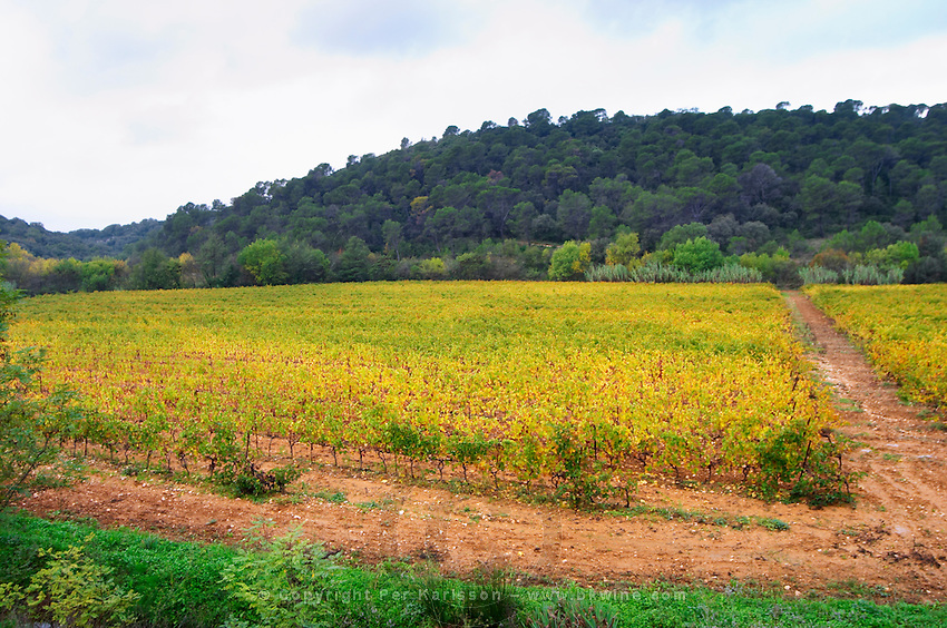 Mas de Perry, Mas Nicot. Terrasses de Larzac. Languedoc. France. Europe. Vineyard.