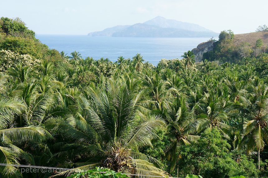 southern coast island  Flores in archipelago of Indonesia, close to Ende with view on Ende island