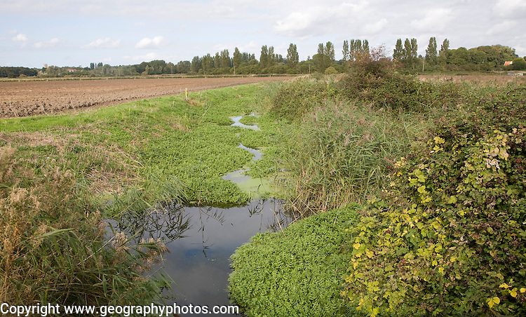 Eutrophication pond weed clogging drainage ditch, Hollesley marshes, Suffolk, England