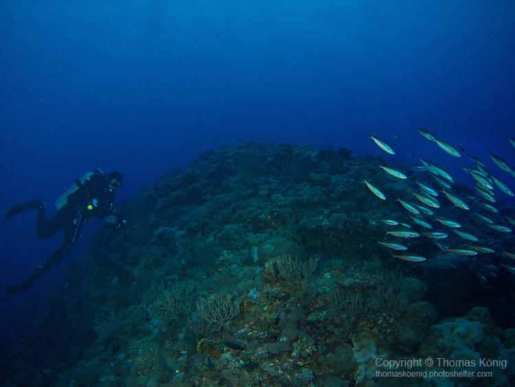 Orchid Island (蘭嶼), Taiwan -- Diver and a school of fish at Jichang Waijiao (機場外礁)