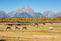 67545-09516 Horses and Grand Teton Mountain Range in fall, Grand Teton National Park, WY