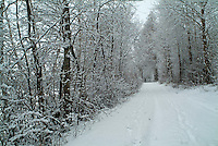 Snowy path through a wintry forest, Selonnet, French Alps, France.