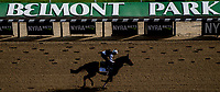 ELMONT, NY - JUNE 08: Gronkowski gallops around the track in preparation on Friday for the 150th running of the Belmont Stakes at Belmont Park on June 8, 2018 in Elmont, New York. (Photo by Scott Serio/Eclipse Sportswire/Getty Images)