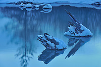 Reflection of tree stumps in pool of Vermilion Lakes, Banff National Park, Alberta, Canada