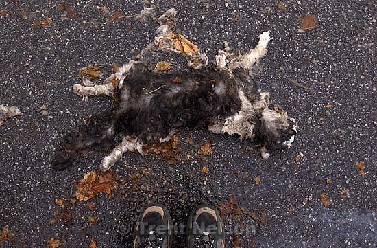 Roadkill dead cat. 11/22/2001, 3:58:33 PM<br />