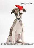 Kim, CHRISTMAS ANIMALS, photos, GBJBWP27156,#XA# stickers