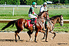winning at Delaware Park on 9/19/13