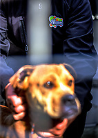 Masterton Council Animal Services in Masterton, New Zealand on Thursday, 20 July 2017. Photo: Dave Lintott / lintottphoto.co.nz
