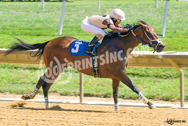 Blue Hen Maddness winning at Delaware Park on 8/24/16