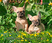 Marek, ANIMALS, REALISTISCHE TIERE, ANIMALES REALISTICOS, dogs, photos+++++,PLMP3274,#a#, EVERYDAY