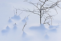 Twigs in snow, Belair Provincial Forest, Manitoba, Canada