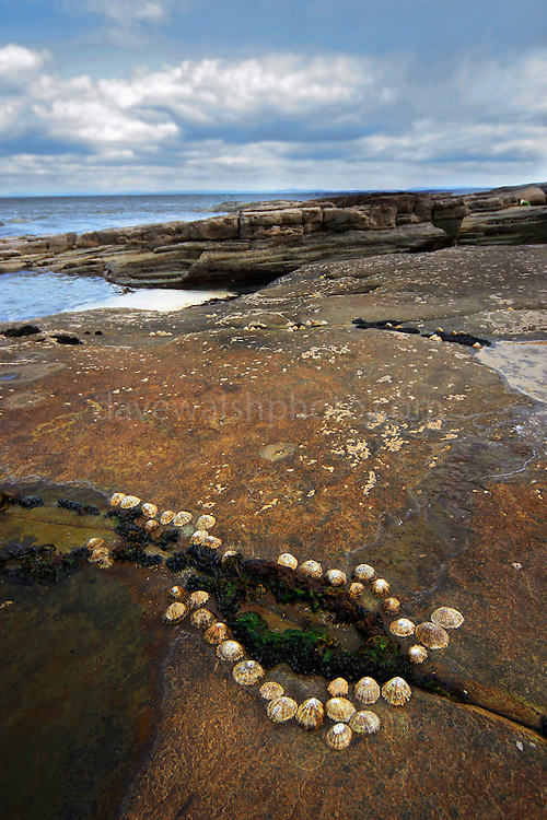 Mullaghmore, Co. Sligo, Ireland. The shells are stuck to the rocks - growing naturally in this suggestive arrangement
