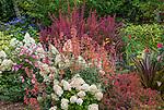 Vashon-Maury Island, WA: Summer perennial garden featuring barberry 'Orange Rocket', hydrangea 'Bobo', Rosa 'Radcor' and Agastache Pstessene