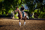 OCT 21: Channel Maker prepares for the Breeders' Cup Turf at Santa Anita Park in Arcadia, California on Oct 21, 2019. Evers/Eclipse Sportswire/CSM