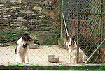 Dogs in a Local pound condemed to Daeth.Story Chris McCashin.Pic Fran Caffrey