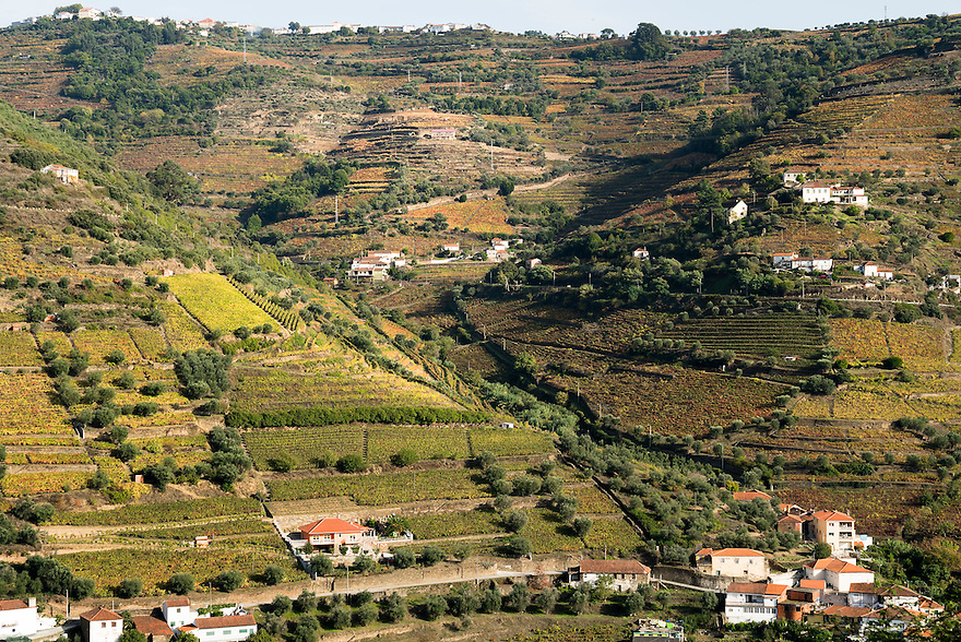 Vineyards line the steep slopes of the Douro Valley in northern Portugal. The Douro Valley is the oldest demarcated wine region in the world and the home of Port.