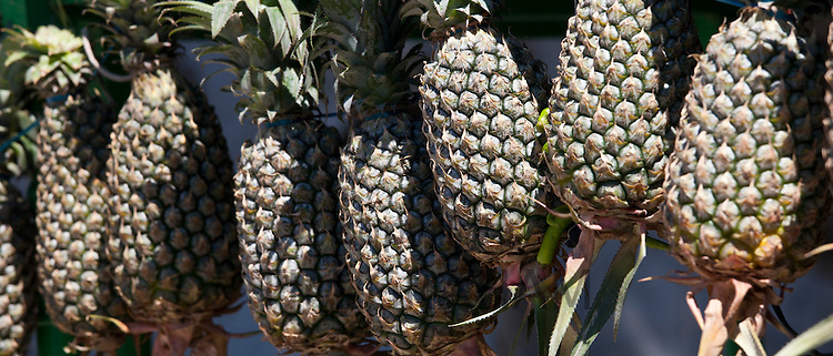 Fresh pineapple on sale in old town market Udaipur, Rajasthan, Western India,