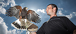 "© Joel Goodman . 3 June 2013 . 3 York Road , Droylsden , Manchester M43 7QB , UK . ALAN LONG (correct) (35) with his Harris Hawk , "" Ria "" (three and a half years old) (correct), whom he attempted to rescue from up a tree after she escaped her leash , only to get stuck half way up the tree himself . They both had to be rescued by the fire brigade . Photo credit : Joel Goodman"