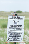 Common Tern (Sterna hirundo), adult in breeding plumage perched on informational sign at boundary of tern breeding colony, Nickerson beach, Long Island, New York, USA