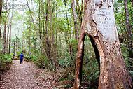 Image Ref: CA291<br /> Location: Sheoak Hike, Great Ocean Road<br /> Date of Shot: 26.04.18